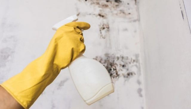 best mold remover products