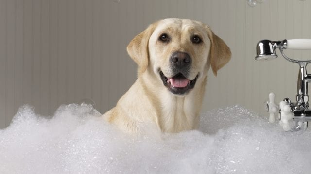 Best Dog Shampoos For Itchy and Sensitive Skin