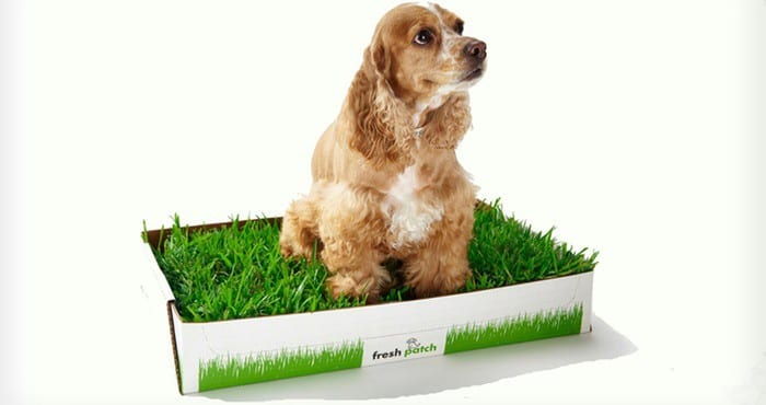 Fresh Patch Disposable Dog Potty with REAL Grass-1